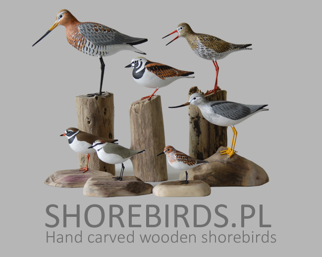 Hand carved shorebirds